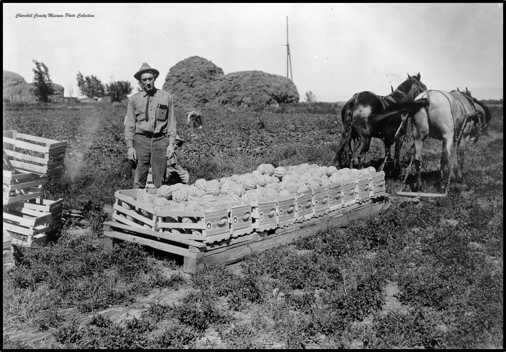 Field Packing with Horses and Sleds